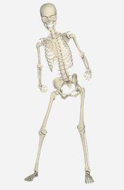 skelet - gewrichten - halloween - reumatoïde artritis